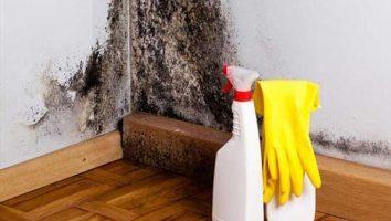 Duvarlarda rutubet küfü neden oluşur, nasıl temizlenir?