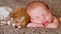 Hayvan sevgisi çocukların kişilik gelişimini nasıl etkiler?