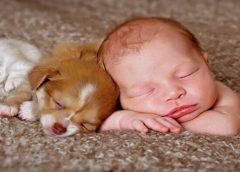 Hayvan sevgisi çocukların kişilik gelişimini nasıl etkiler
