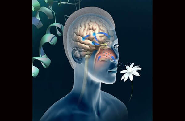 koku duyusu neden önemlidir Koku duyusu ve hafıza ilişkisi