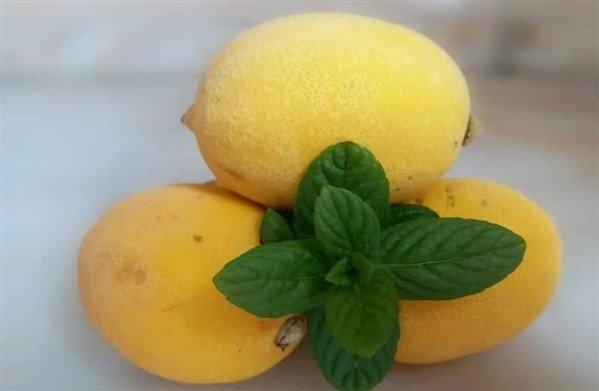limondan limonata nasıl yapılır